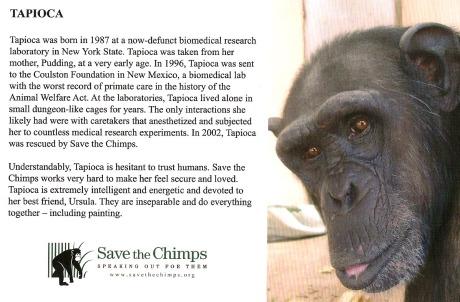 chimp#1a